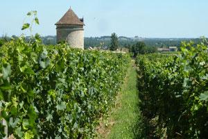 Philosophie : Château Puyfromage - Vignes