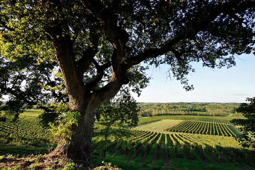 Travail de la vigne : Savoir-faire