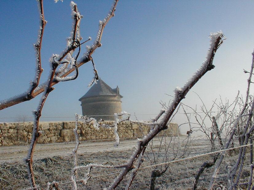 Climatologie : Terroir du Château Puyfromage
