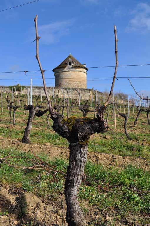 Travaux Vigne Calendrier.Calendrier Annuel Le Travail De La Vigne Chateau Puyfromage