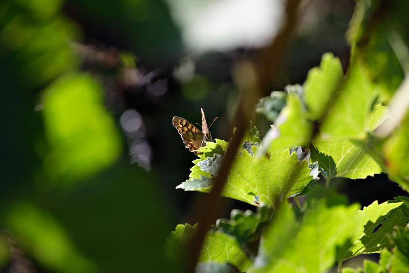 Environnement : biodiversité