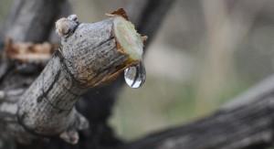 Saisons : Les pleurs