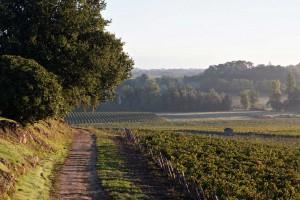 Vignoble du Château Puyfromage