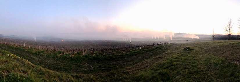 La vigne pousse ! Notre équipe est au travail. - Récolte 2020 Vin Bordeaux