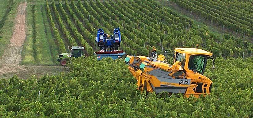 Un millésime 2020 prometteur au Château Puyfromage : Vin de Bordeaux